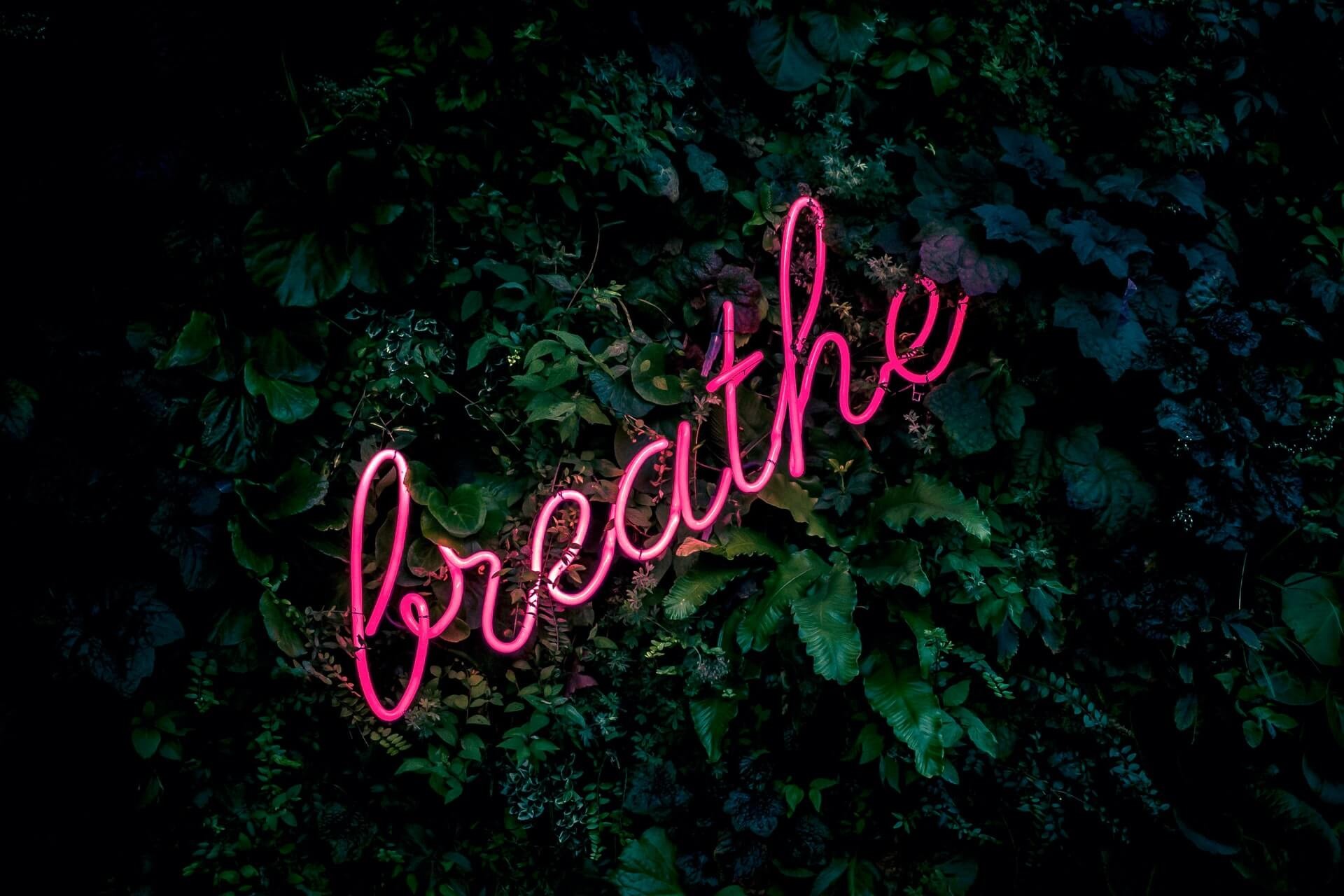 breathe in neon lights on foliage background